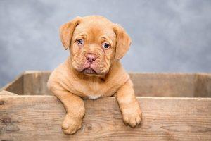 Cadenas para perros